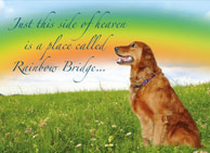 donation card_rainbowbridge_memory_pet