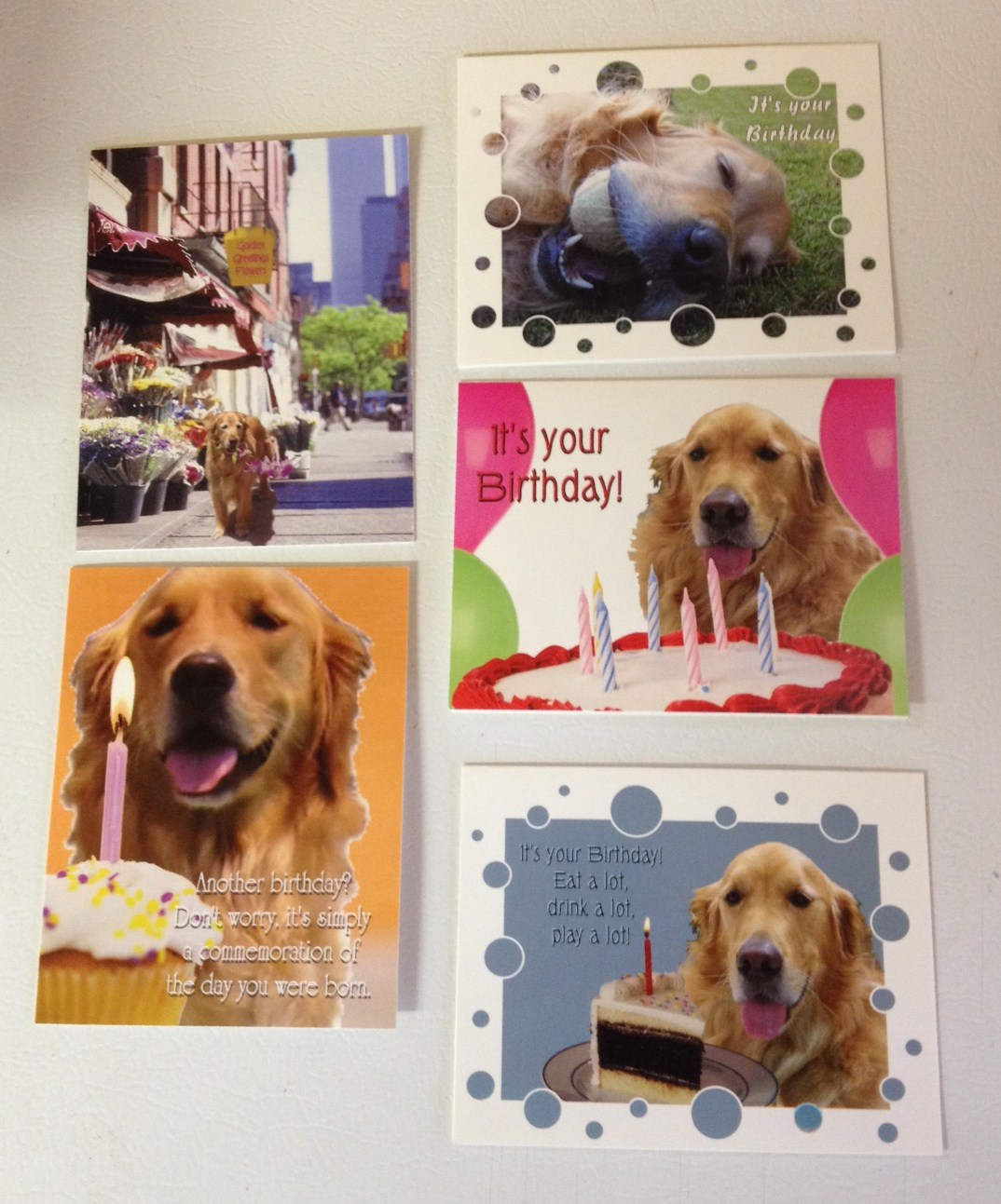 Birthday Cards Delaware Valley Golden Retriever Rescue