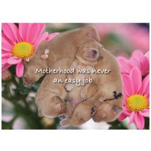 40106 Mothers Day Card Front