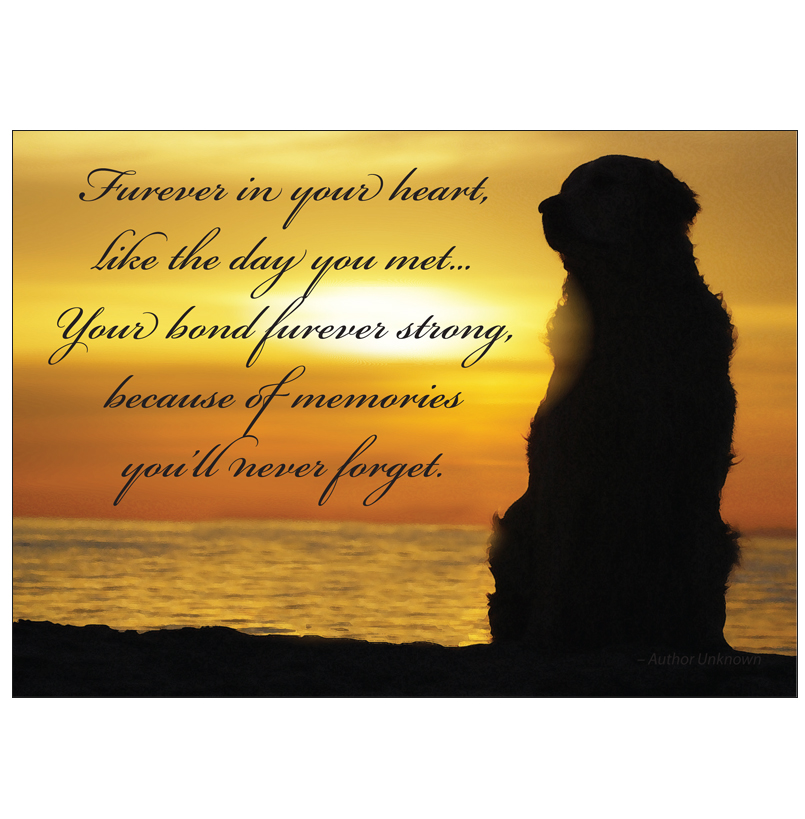 Donation greeting card furever in your heart in memory of a pet donation greeting card m4hsunfo