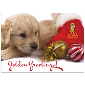 40106 Golden Greetings Front