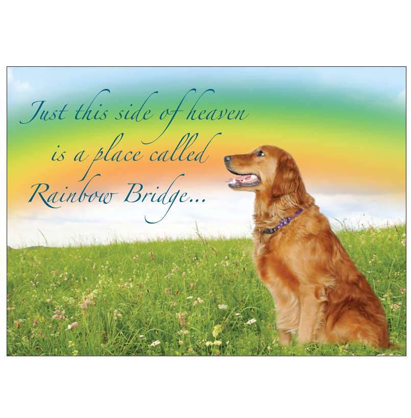 Donation greeting card rainbow bridge in memory of a pet the donation greeting card m4hsunfo