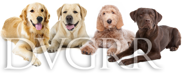 Meet greet the goldens day delaware valley golden retriever rescue carefully read through our adoption section and if you have any questions that are not answered on this site please email zack morgan m4hsunfo