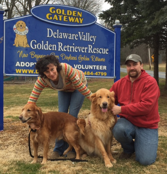 Jesse 4 goes home - Delaware Valley Golden Retriever Rescue
