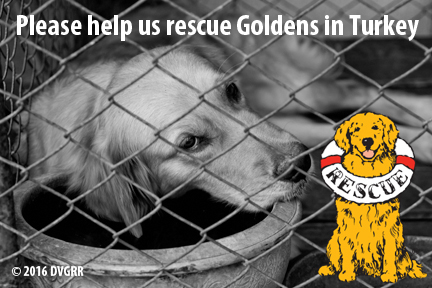 With your help, our goal is to raise money to rescue as many of these dogs as we can.