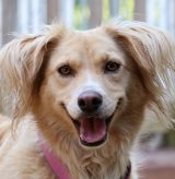 16-138 LADY #25 C Mix Dog Breed