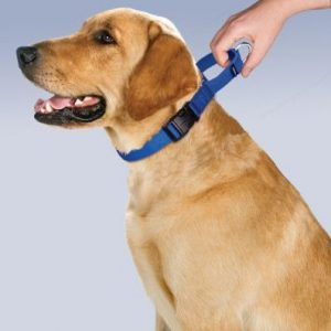 quick release martingale collar