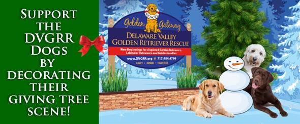 Available Dvgrr Dogs Delaware Valley Golden Retriever Rescue